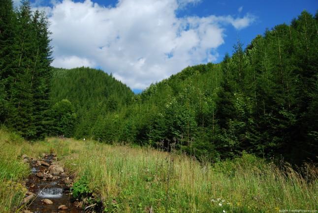 forest-water-646x433-jpg