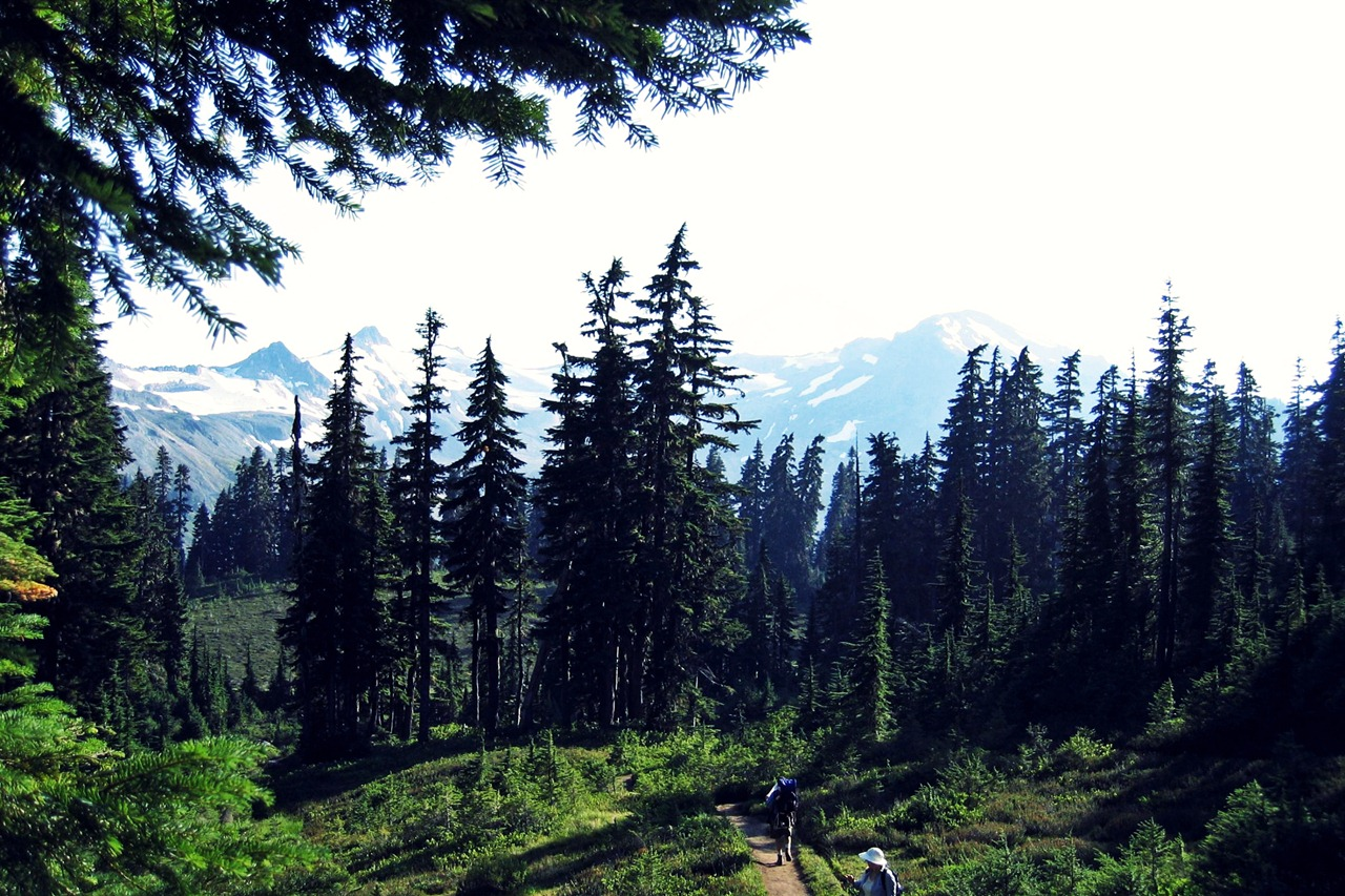 washington-state-forest-jpg